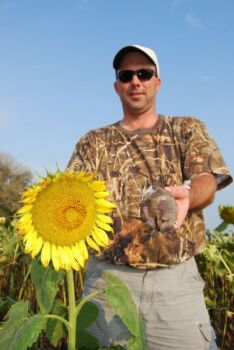 The S.C. Department of Natural Resources maintains public dove fields across the state, many of them planted in sunflowers.