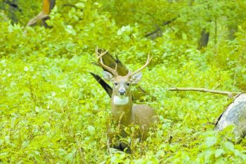 Lots of rain means lots of greenery, which means healthy deer and bigger bucks come fall.