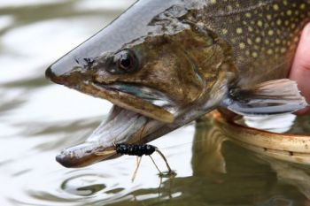 Learn more about fly fishing and fly tying at fayetteville for Fishing in fayetteville nc