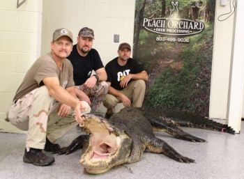 Ronnie Jackson and Jim Strong (left and center) killed this 12-foot-4 alligator in Santee Cooper's Sparkleberry Swamp, then got help from Danny Reynolds (right) to load him on a utility trailer for the ride to the processor's.