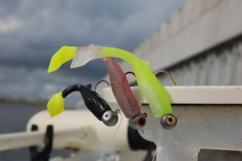 The Vortex Shad comes in dual colors and a big V-shaped tail that wobbles, driving fish crazy.