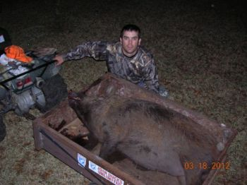 Deer hunters can do themselves a big favor by targeting wild hogs, when available,  especially after the end of deer season.