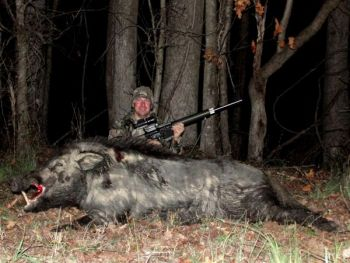 Hogs were originally introduced into North Carolina to be hunted by wealthy guests of a game preserve in Graham County.