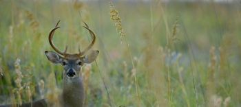 Hunters are passing up more young bucks than ever before, according to a survey done by QDMA.