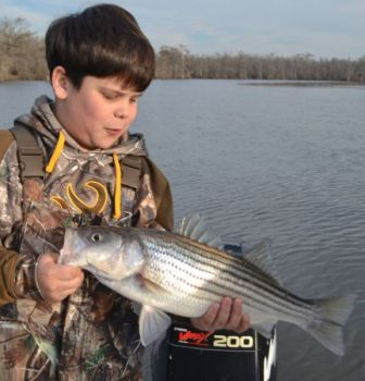 Garrett McCoy, 10, from Greenville shows off a nice striper from the lower Roanoke River.