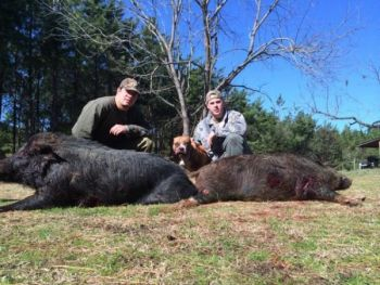 Hunter Morris and Hunter Shepherd took these two wild hogs, weighing 350 and 250 pounds, on a hunt at Pinewood Farms near Rimimi.