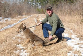 This coyote, trapped in Bertie County, N.C., is about to meet its maker. Unfortunately, as a top-level predator, it likely took a toll on popular game species.