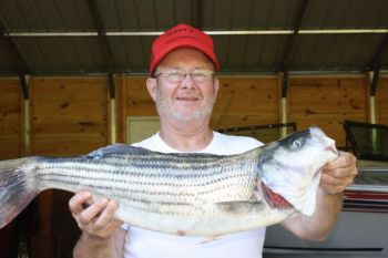 Guide Jerry Hill of Lexington caught an 8-fish limit of striped bass on High Rock Lake this past Saturday that averaged better than 10 pounds per fish, anchored by this 11.3-pound fish.