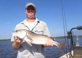 Redfish are starting to hit live bait in the cuts and along spoil islands in the Cape Fear River and in coastal creeks around Carolina Beach.