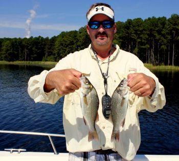 White perch are providing fishermen at north carolina s for Freshwater fishing in north carolina