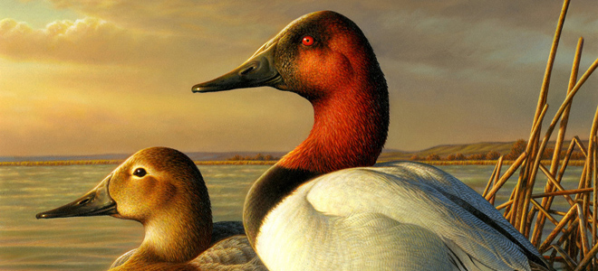 North Carolina hunters can buy duck stamps on-line Aug. 1
