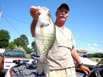 Guide Chris Bullock has been catching plenty of slab crappie out of Kerr Lake on jigging spoons and mini-jigs.
