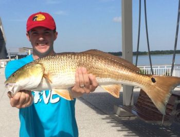 Russell Anderson caught this 33-inch redfish when a school passed by the Mount Pleasant Pier recently.
