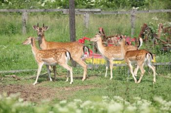 The N.C. Wildlife Resources Commission is seeking public comment on possible changes to who manages captive populations of deer in North Carolina and how they will be managed.