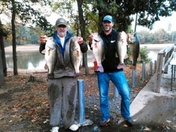Anglers profiting from low-water conditions to catch bass concentrated in backs of creeks.