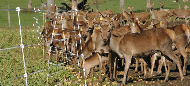 Commission votes to continue restrictions on farm-raised elk, whitetails