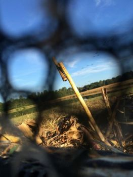 South Carolina's goose season runs into late February, giving hunters more opportunities to share this view of approaching geese through the door of a portable layout blind.