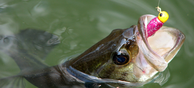 Downsize baits for better winter results on bass, stripers