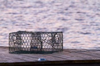 A Chowan County man faces multiple charges for stealing dozens of crab pots in an investigation that lasted 8 months.