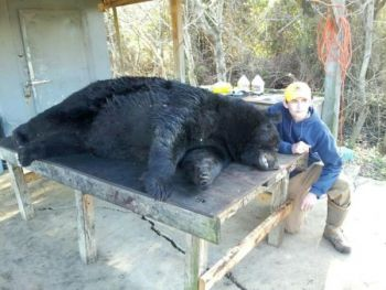 A 16-year-old Wilmington hunter has killed a 784-pound black bear, the second-largest ever taken in North Carolina.