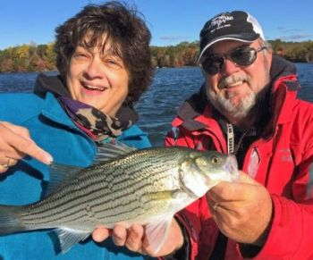 Hybrid bass, first stocked in Lake Norman in 2013, are putting on a show since the weather has turned cold.