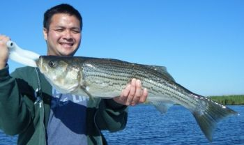 A great winter bite with striped bass has got fishermen along the lower Roanoke River smiling broadly.