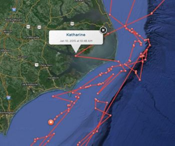 A 14-foot great white shark named Katharine spent several days in North Carolina waters the second week of January, according to an ocean research group.