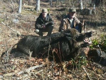 Bruce Florence (right) killed this 707.5-pound wild boar last Friday in Transylvania County on a hunt with his son, Jonathan.