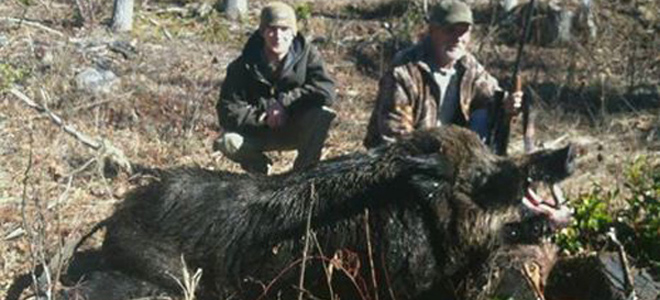 Father-son duo bring home the bacon from Transylvania County hog hunt