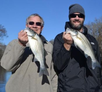 Fishermen on the lower Roanoke River are regularly having 100-fish days, and there's no sign of things slowing down.