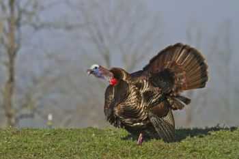 For tough turkeys, don't be afraid to go off the beaten path.