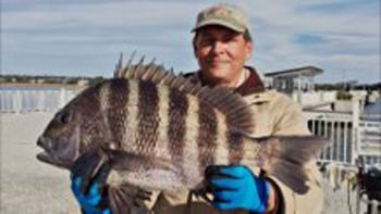Gerald Grenier's 9-pound, 1-ounce sheepshead set a Mount Pleasant Pier record for ultralight tackle.