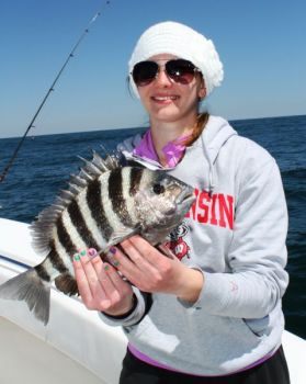 Chum, use heavy tackle, set  your reel's drag tight and fish around structure and you'll catch more sheepshead.