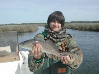 Fishermen around Cape Lookout are finding only red drum and black drum willing to bite after the recent cold snaps.