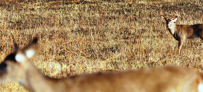 Poor deer season last fall had  mulltiple causes, biologist says