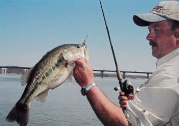 A Kerr Lake guide is finding more and more bass moving to staging areas, hitting jerkbaits.