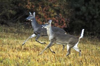 North Carolina hunters killed almost 44,000 fewer deer last fall than in the 2013-14 season, the N.C. Wildlife Resources Commission has announced.