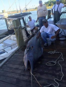 Three men on a 24-foot center console boated a 110-inch blue marlin on a trip out of Morehead City on Monday.