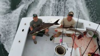 The nearshore waters out of Oregon inlet have been full of hungry cobia the past week or 10 days.