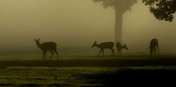 Late afternoons and early evenings can be great times to get a look at members of your local deer herd.