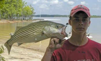 Lake Gaston's stripers are still well upstream from the main-lake area, but they're biting.