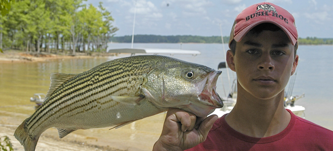 Head up the lake for Gaston's best striped bass bite