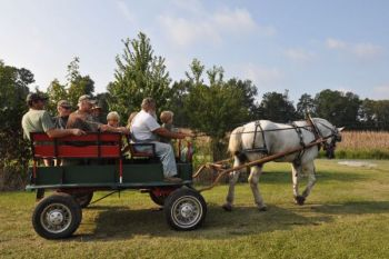 One nostalgic part of an opening day dove hunt at The Mill Pond Hunt Club is riding in a horse-drawn wagon to the fields.