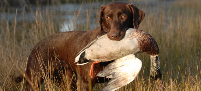 State sets duck, goose seasons at meeting in Raleigh on Thursday