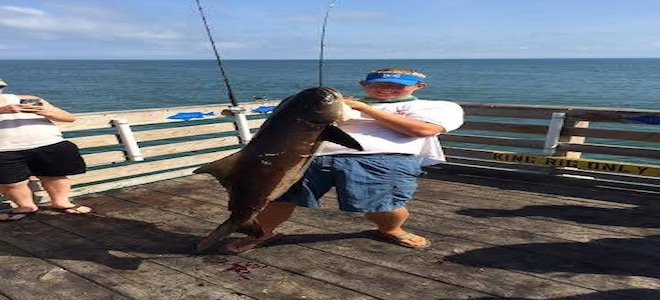 60-pound cobia hits king rig at Avalon