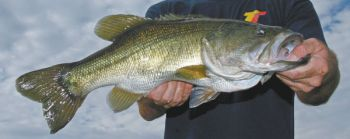 September can be a tough month for bass, but it can be a productive one as well