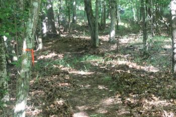 Cleaning out and marking a path to your stand will make it easier to get in without spooking nearby animals.