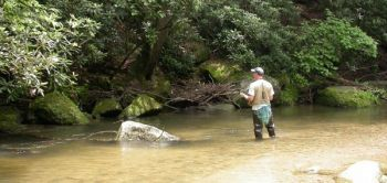 Tributary creeks are good spots to look for spawning brown and brook trout in the fall.