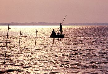 Shrimp baiting season is here, and the SCDNR expects it to be a good year from outdoorsmen.