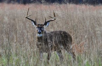 It took an eleventh-hour modification by the North Carolina Republican Caucus, but the oversight of deer farms stays with the NCWRC.